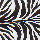 Animal Frenzy  Zebra
